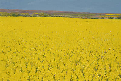 Ripe Painting - Rape Field by Alan Byrne