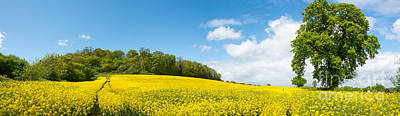 Photograph - Rapeseed Field by Colin Rayner