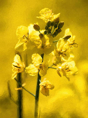 Photograph - Rapeseed by Trevor Wintle