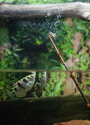 Photograph - Rapid Firing At The Insect by Dan Friend