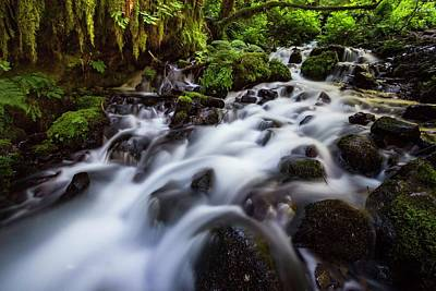 Photograph - Rapids On Wahkeena Creek by Hans Franchesco