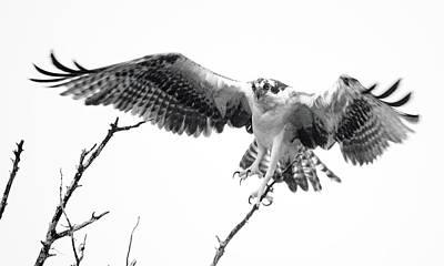 Photograph - Raptor Elite by Lamarre Labadie