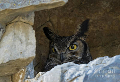 Great Horned Owl Wall Art - Photograph - Raptor Eyes by Mike Dawson