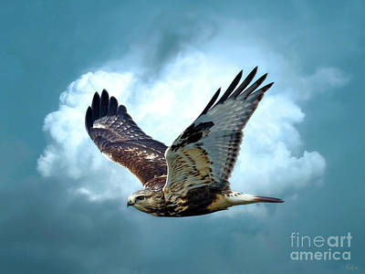 Hawk Mixed Media - Raptor In Flight by KaFra Art