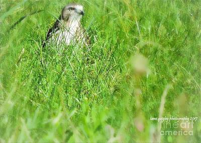 Photograph - Raptor In The Grass by Tami Quigley