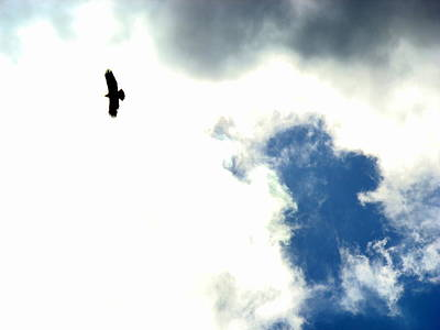 Photograph - Raptor In The Sky by Lisa Rose Musselwhite