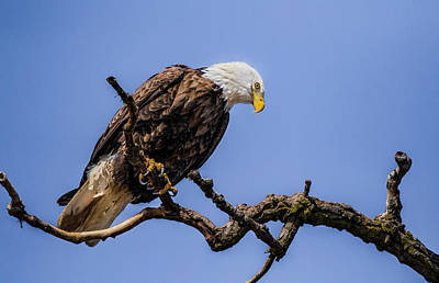 Photograph - Raptor On High by Ray Congrove