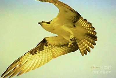 Soaring Painting - Raptor Osprey by Deborah Benoit