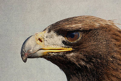 Closeup Mixed Media - Raptor Wild Bird Of Prey Portrait Closeup by Design Turnpike