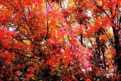 Pistache Tree Photograph - Rapture In Reds by DiDi Higginbotham