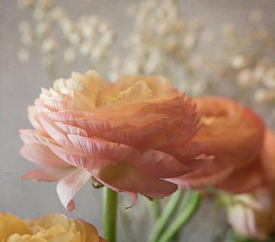 Photograph - Ranunculus - 6315 by Teresa Wilson