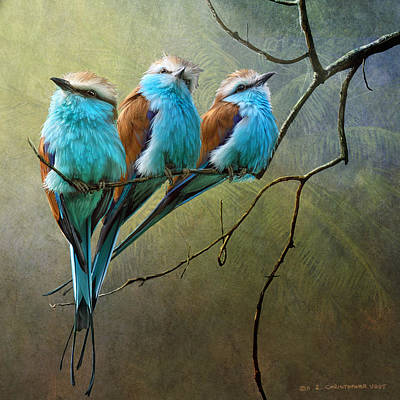 Raquet Tailed Rollers Art Print by R christopher Vest