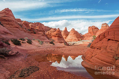Photograph - Rare Reflection by Bill Singleton