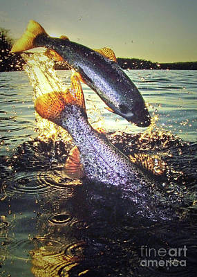 Rainbow Trout Photograph - Rare Solar Eclipse by Brian Pelkey