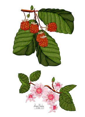 Raspberry Digital Art - Raspberries And Raspberry Blossoms by Anne Norskog
