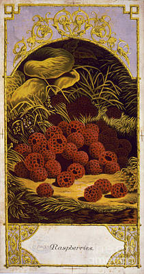 Mixed Media - Raspberries Vintage Fruit Label by Edward Fielding