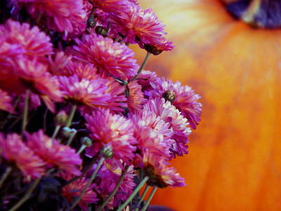 Photograph - Raspberry Autumn by Wild Thing