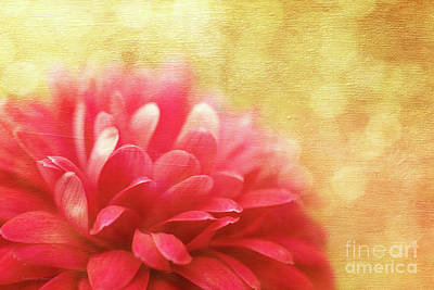 Raspberry Digital Art - Raspberry Champagne  by Beve Brown-Clark Photography