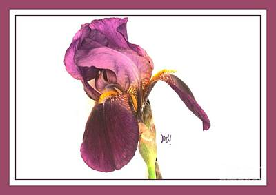 Photograph - Raspberry Iris by Marsha Heiken
