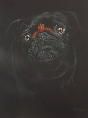 Raspberry Drawing - Raspberry Pug by Bernardo Castaneda