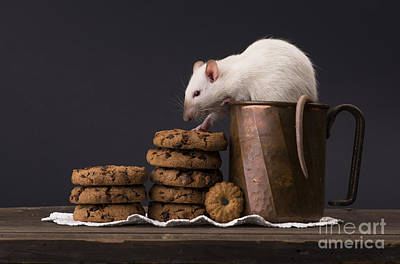 Hamster Baby Photograph - Rat by Andrea Kornfeld