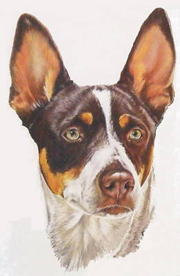 Mixed Media - Rat Terrier Portrait by Barbara Keith
