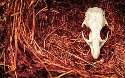 Rats Skull In Nest Art Print
