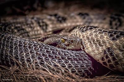 Photograph - Rattle Snake by LeeAnn McLaneGoetz McLaneGoetzStudioLLCcom