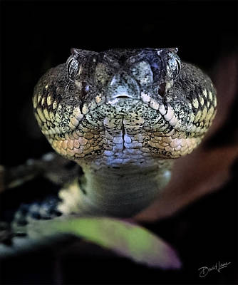 Photograph - Rattler Eye To Eye by David A Lane