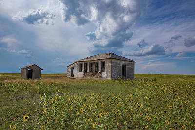 Sunflowers Royalty-Free and Rights-Managed Images - Rattlesnake Butte School, Eastern Plains of Colorado by Bridget Calip