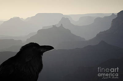 Montage Photograph - Raven And Grand Canyon by Dave Gordon