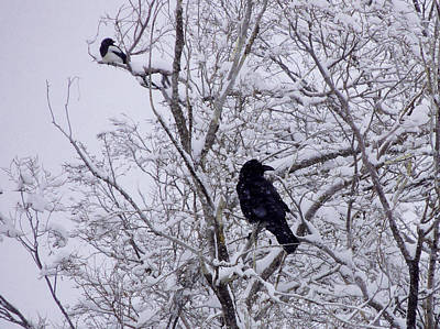 Photograph - Raven And Magpie by Jeannie Bushman