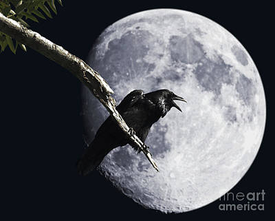 Avian Digital Art - Raven Barking At The Moon by Wingsdomain Art and Photography