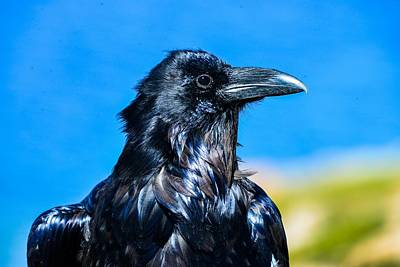 Photograph - Raven By Yellowstone Lake by Marilyn Burton