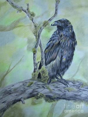 Drawing - Raven Colors by Laurianna Taylor