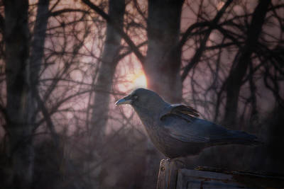 Photograph - Raven Dawn by Susan Capuano