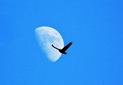Photograph - Raven Flys Past Quarter Moon by Deborah Moen