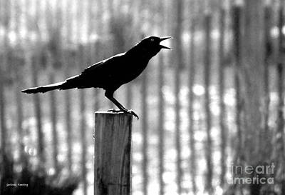 Black_white Photograph - A Chirping Raven by Gerlinde Keating - Galleria GK Keating Associates Inc