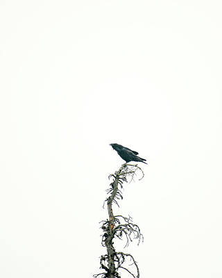 Photograph - Raven, Hurricane Ridge by Ronda Broatch
