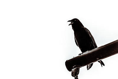 Photograph - Raven In Black And White by Wade Brooks