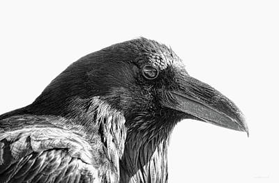 Photograph - Raven by Jennie Marie Schell