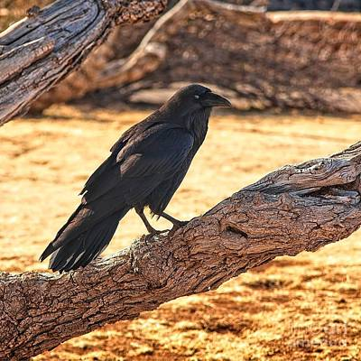 Photograph - Raven by Jon Burch Photography
