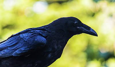 Art Print featuring the photograph Raven by Jonny D
