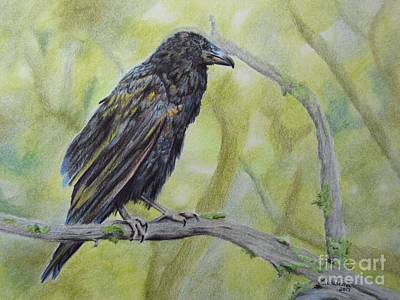 Drawing - Raven by Laurianna Taylor