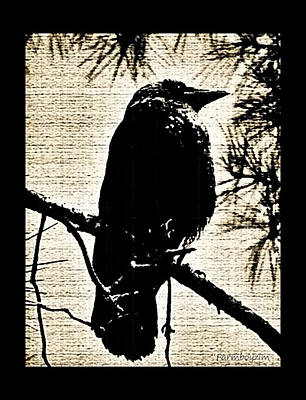 Photograph - Raven On The Lookout by Harold Zimmer