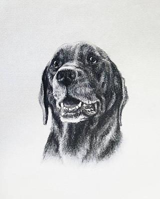 Drawing - Raven by Risa Kent