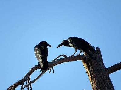 Photograph - Raven Speak by Jacqueline  DiAnne Wasson