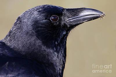 Photograph - Raven Spirit by Sue Harper