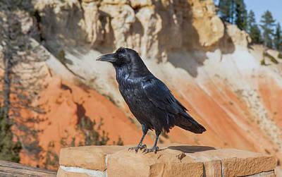 Photograph - Raven Tour Guide by John M Bailey