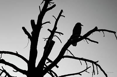 Photograph - Raven Tree II Bw by David Gordon